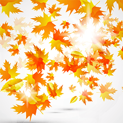 September 2013 Financial Aid News Autumn Leaves